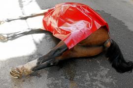 El último caballo que murió no podía tirar de galeras porque no estaba registrado