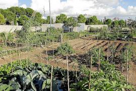 Cort creará un banco de tierras con terrenos en desuso y solares vacíos
