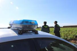 Cuatro detenidos por robar en fincas agrícolas y establecimientos de la Part Forana