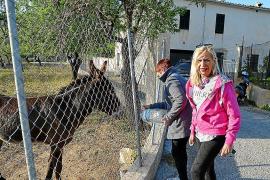 Denunciado el dueño de un burro por abandono en Andratx