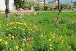La primavera será leve para los alérgicos en Balears