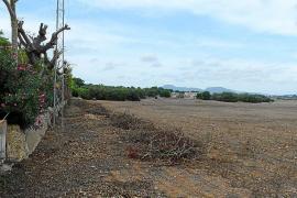Rechazo unánime en Manacor a los grandes parques solares