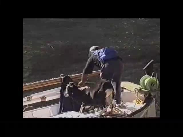 Un documental muestra cómo en 2001 se sacaban vivas las cabras de Es Vedrà