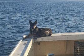 Aparece viva una perra cinco semanas después de caerse de un barco en el Pacífico