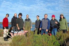 Voluntarios del GOB habilitan islotes del Salobrar de Campos para nidificar las aves