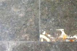 Un fósil en una baldosa