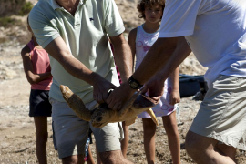 Antich y Vicens sueltan cuatro tortugas marinas en Cabrera
