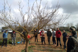 Porreres presenta el proyecto «Nous albercoquers» al sector agrícola