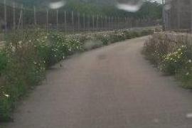 Limpieza de los caminos rurales de Alcúdia