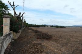 El Govern abre la puerta al parque solar de Santa Cirga de Manacor al reducir su impacto