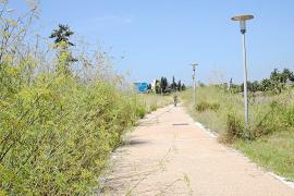 La maleza y el abandono invaden el paseo de Calvià entre la rotonda de Cala Figuera y Santa Ponça