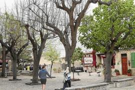 Una 'invasión' de palomas obliga al Consistorio de Valldemossa a tomar medidas