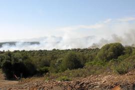 Más de 3.500 tortugas mediterráneas han muerto en los recientes incendios en el norte de la Isla