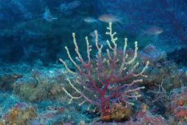 Cabrera, 25 años de protección y riqueza submarina