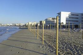 El GOB denuncia el despliegue «sin licencia» de sombrillas y hamacas en Can Picafort y Son Bauló