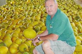 Los productores de melón recolectan más de mil toneladas esta temporada