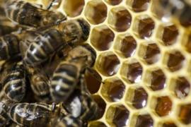 Muere un hombre de 81 años tras ser atacado por un enjambre de abejas