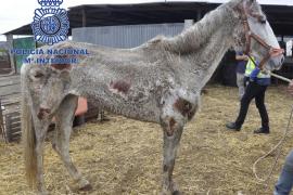 Detenidas dos personas tras hallar 22 caballos y 4 perros desnutridos en una finca de Málaga