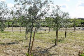 La ciudad gana un nuevo espacio verde con un parque junto al IES Manacor