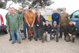 Capturan varias cabras salvajes mallorquinas en Alcúdia para el programa de cría
