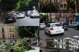 Poda en Plaza Fortí y calle Ramón y Cajal