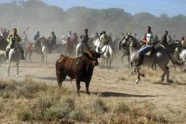 La Junta de Castilla y León prohíbe la muerte del Toro de la Vega