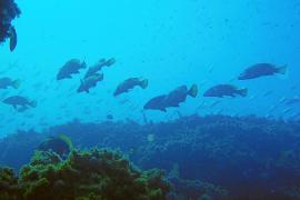 El Consell Pesquer prohíbe la pesca submarina en la Reserva de Llevant