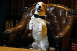 Muere 'Pancho', el perro millonario