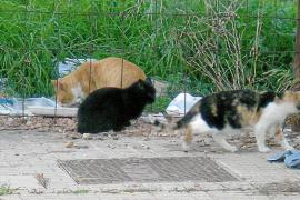 El Ajuntament autorizará este mes una quincena de colonias urbanas de gatos