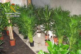 Intervienen 395 plantas que carecían de autorización para su comercio