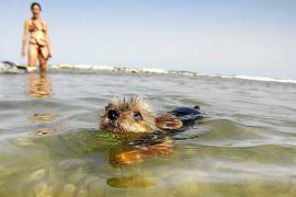 La Colònia de Sant Pere impulsa un turismo de mascotas para alargar la temporada