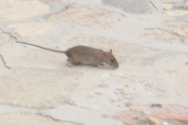 Ratas y cucarachas en los vestuarios de la Estación Intermodal, según CCOO