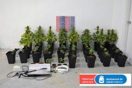 Un detenido en Santa Ponça por tener una plantación marihuana en la terraza de su vivienda
