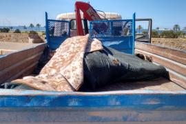 Muere un caballo desbocado en Dalt Murada