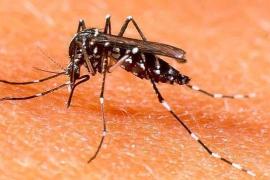 Llucmajor inicia una nueva campaña para el control y prevención del mosquito tigre