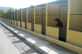 Condenada una mujer por 'robar' su propio perro del centro de Son Reus