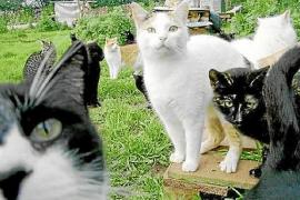 Prohibido dar comida a los gatos salvajes