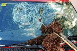 Arrestado tras agredir a su mujer y destrozarle el coche en Palmanyola