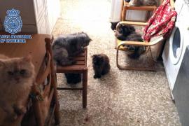 Detenido un matrimonio que tenía 39 gatos y 13 perros hacinados en su casa