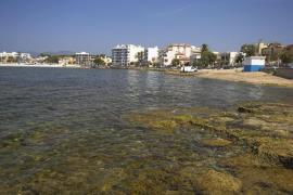 Siete playas de Mallorca para ir con perros