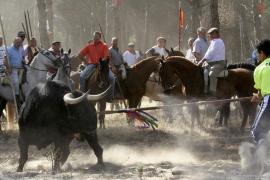 Tordesillas sustituye el Toro de la Vega por el Toro de la Peña
