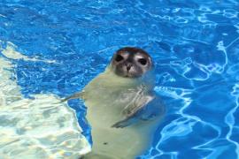Nacen una foca y un león marino en Marineland