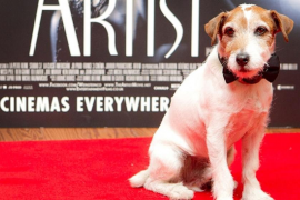 Lanzan una prueba piloto para que los perros puedan entrar a los cines
