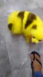 Un fan de Pokémon GO tiñe a su perro como Pikachu