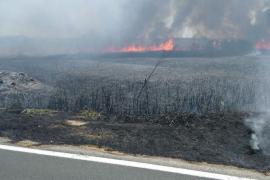 Declarado un incendio de nivel 1 en s'Albufera
