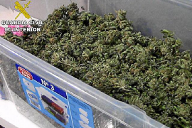 Un Benabab ofreció a una mujer una operación de pechos por cultivar marihuana