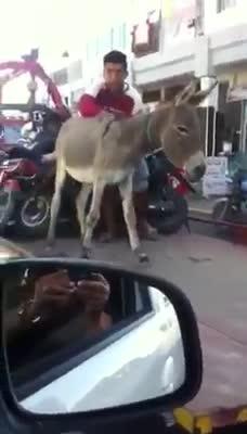 Una grúa se lleva a un burro por infringir el código de circulación