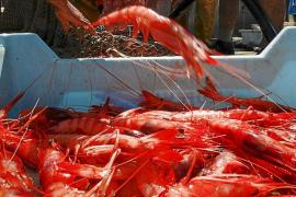 Los pescadores del Port de Sóller, desesperados tras un mes sin capturar 'ni una gamba'