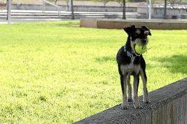 Fracasan los parques de convivencia canina