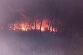 Un incendio ha calcinado de madrugada casi dos hectáreas de pinar en sa Canova